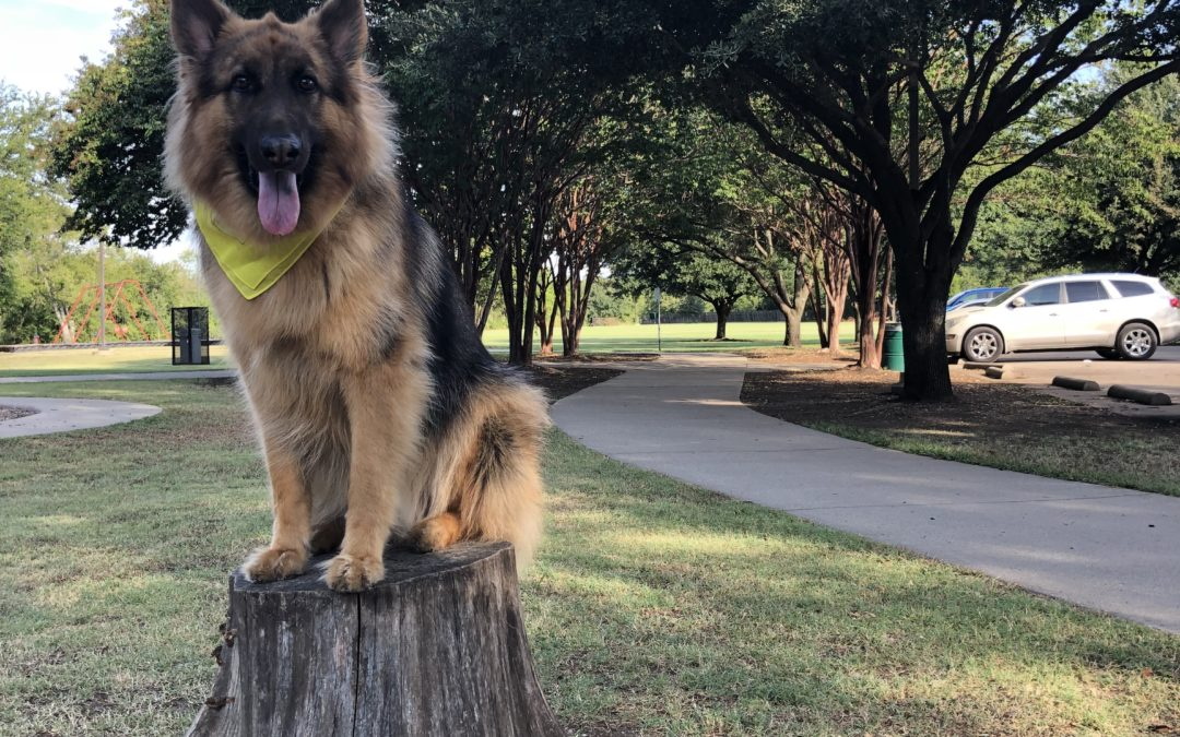 Dog Training Owasso | Who Is the Trainers in Owasso to Visit