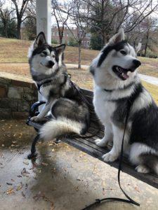 Boarding Dogs In Boise
