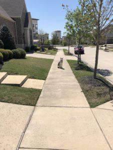 Tulsa Dog Trainers
