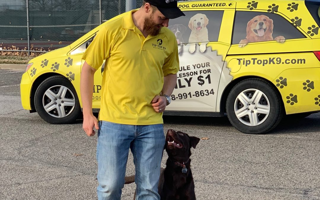 Dog Training Keller Texas | Let Us Be The Best For Your Dog