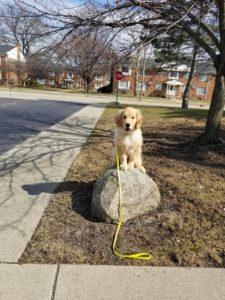 Maverick Troy Dog Training