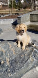 Maverick Troy Dog Trainers Training