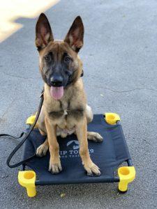 Dog Training Fayetteville