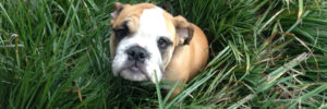 pottytrainingpage-copy