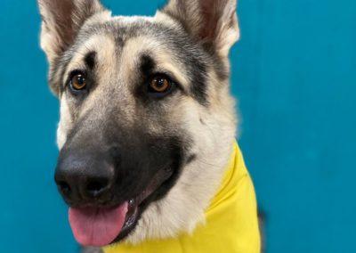 Puppy Training Tulsa 12