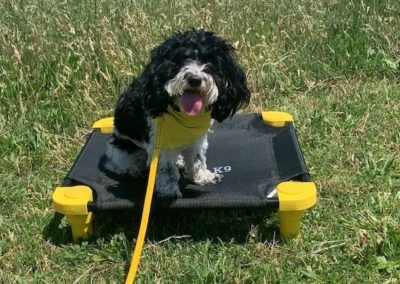 Puppy Training Tulsa 13