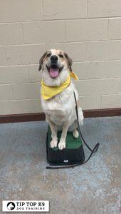 Edmond Dog Training