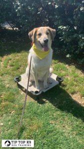 Puppy Training Tulsa 15