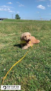 Puppy Training Tulsa 16