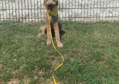 Puppy Training Tulsa 17