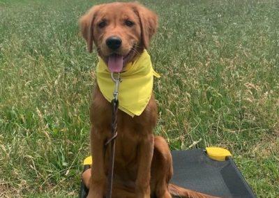 Puppy Training Tulsa 18