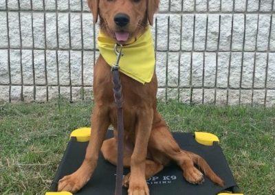 Puppy Training Tulsa 19