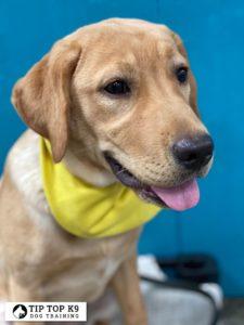 Puppy Training Tulsa 20