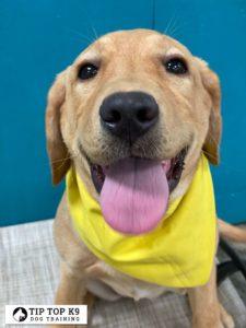 Puppy Training Tulsa 21