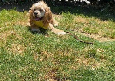 Puppy Training Tulsa 22