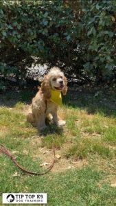 Puppy Training Tulsa 23