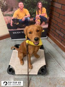Puppy Training Tulsa 4