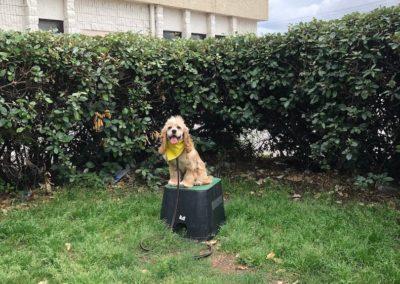 Puppy Training Tulsa 5