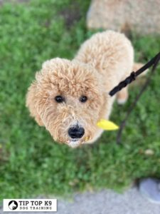 Puppy Training Tulsa 6