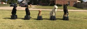 puppytrainingpage-aboutuspage