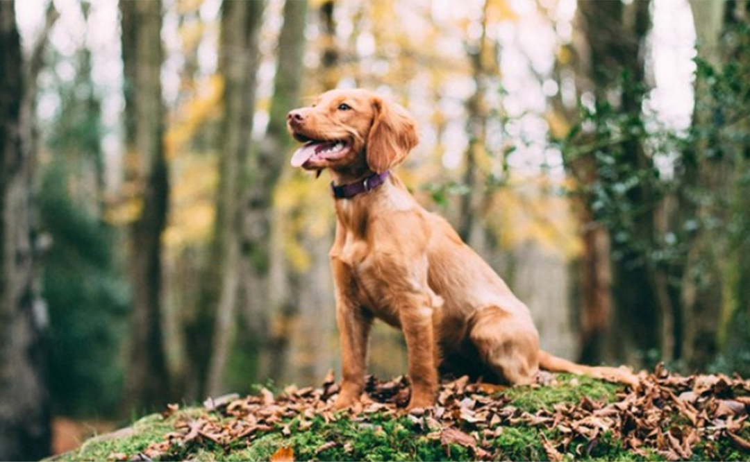 Dog Training In Meridian Idaho | You'll Be Singing Pawlelujah