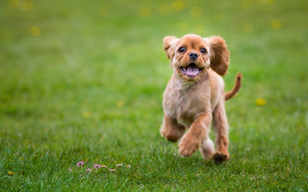 Owasso Dog Boarding | Experience Great Results Quickly