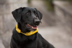 Find Dog Trainers Tulsa
