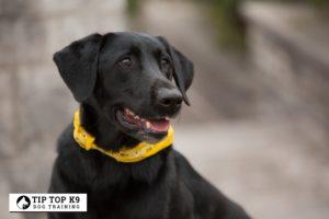 Top Dog Training West Jordan Utah