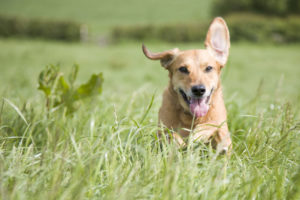 Find The Best Dog Trainers In Boise Idaho