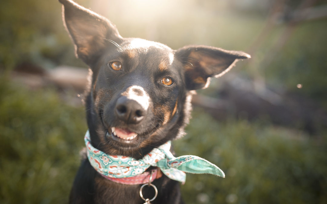 Boise Dog Boarding | Get Your Dog Into Our Programs