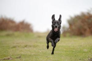 Oklahoma Dog Trainers