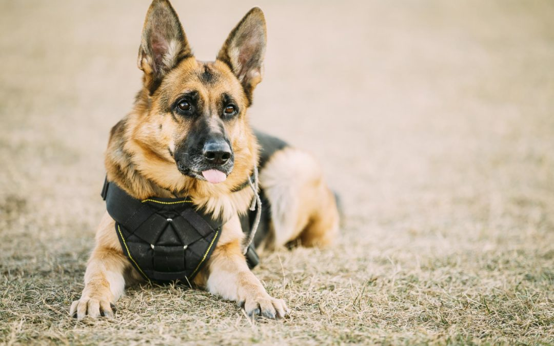 Oklahoma City Dog Trainer | The Best Work Around