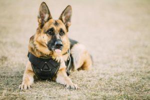 Oklahoma City Dog Trainer