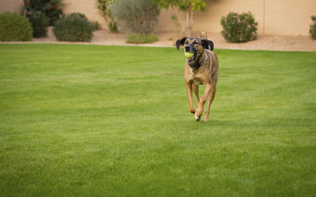 Find Dog Trainers Meridian Idaho | Best Resource For Your Dogs