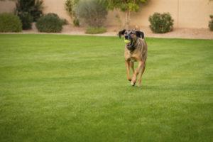 Find Dog Trainers Meridian Idaho