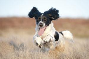 Meridian Idaho Puppy Training