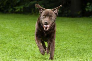 Tulsa Dog Training