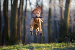 Dog Training Okc