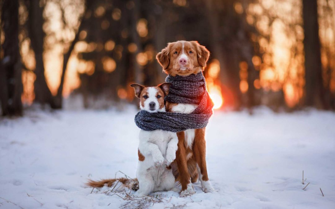Dog Training Troy MI | Call Us Today For Your Consultation!