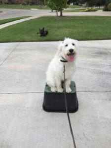 Tulsa Dog Training 1 Sugar