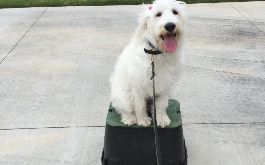 Best Dog Training In Oklahoma City | We Are The Greatest In Oklahoma City.