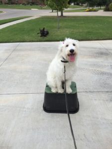 Best Dog Training In Oklahoma City