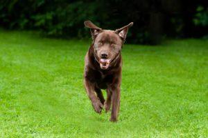 Tulsa Dog Training Company