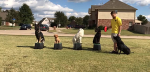 Meridian Idaho Dog Trainers