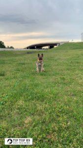 Find Dog Training Southlake Texas