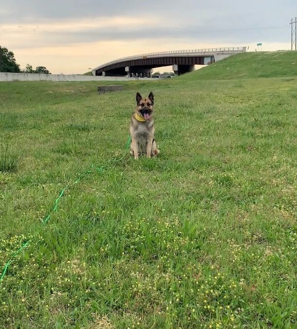 Find Dog Training Southlake Texas | How Get Your Dog To 'Stay'?