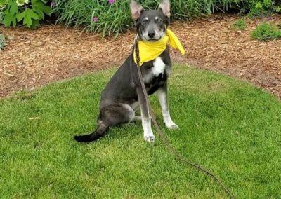 Top Allen Dog Training