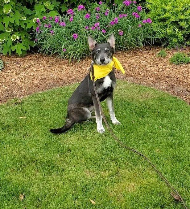Top Allen Dog Training | My Dog Keeps Barking