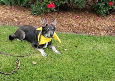 Best Mckinney Dog Training