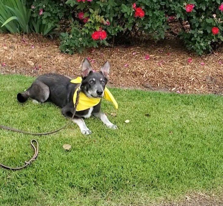 Best McKinney Dog Training | Have an Unruly Dog? Basset Over!